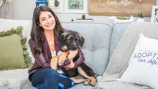 Adoption Ever After - Monday - Home & Family