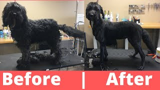 What To Do If Someone Can't Afford The Groom | All Groomers Should Do This