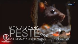 I-Witness: 'Mga Alagang Peste,' dokumentaryo ni Kara David (full episode)