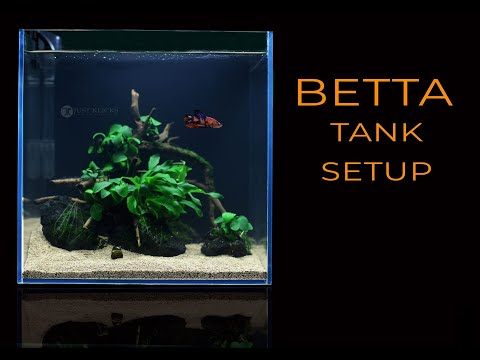 #52 Fish Tank Setup For Betta