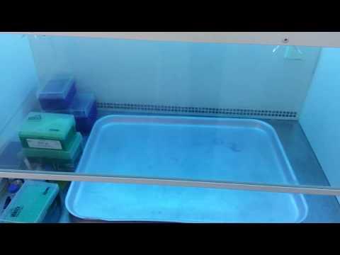 О стерильности помещений в лаборатории