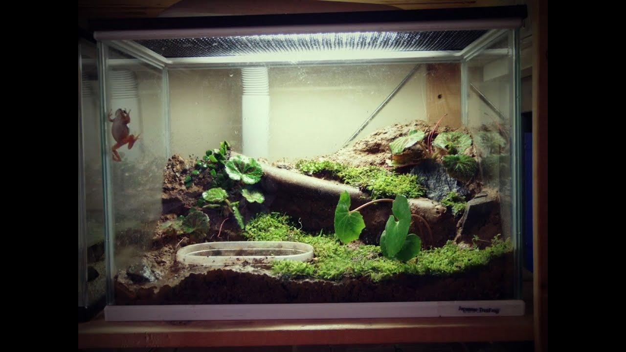 Tree Frog Vivarium Youtube