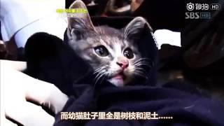 头发现了一只饥肠辘辘的小猫,奇怪的是,它找到了食物后,自己不吃 thumbnail