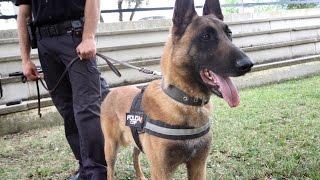 Héroes de cuatro patas: así trabajan los guías caninos de la Policía Nacional