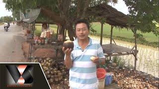 Cây Thốt Nốt [MC Việt Thảo] - Vân Sơn in The Kingdom Of Cambodia - Vân Sơn 37