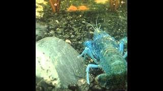 Dalmatian Fish & Self Clone Crayfish!