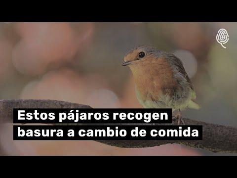 Pájaros que recogen basura a cambio de comida