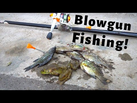 BLOWGUN FISHING For GILL's And FROGs (Catch,Clean,Cook)