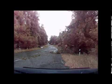 Дерево на дороге!