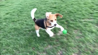 this-ball-is-mine-forever