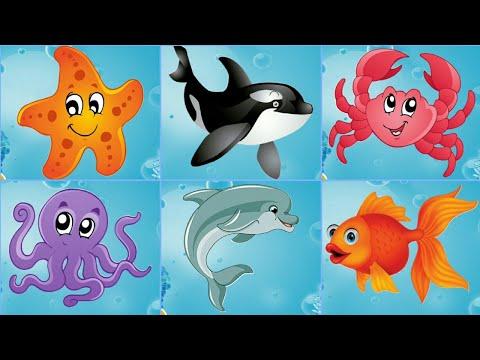 Морские животные для детей. Жители морей и океанов.Развивающее видео для детей.