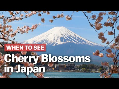 When to See Cherry Blossoms in Japan | japan-guide.com