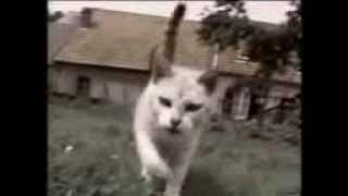 Коты-хулиганы.3gp