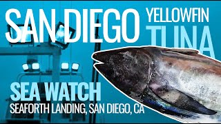 San Diego YellowfIn Tuna - Seaforth Landing - Sea Watch Full Day Fishing