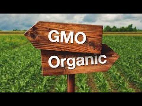 GMO versus Organic Food