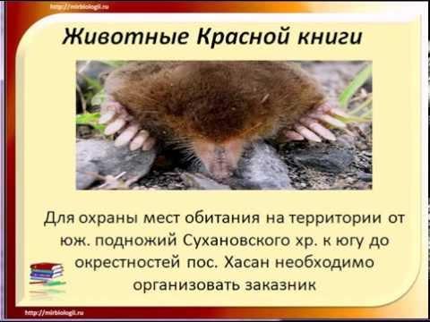Красная книга России - животные млекопитающие