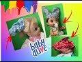 LOOK MALUCO SAPATO NA CABE  A  BATOM NO P    BABY ALIVE AMANDINHA LILO E BABY MORANGUINHO
