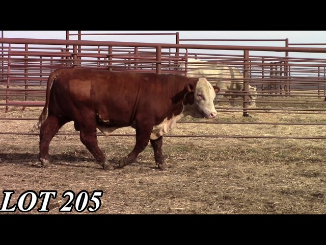 Mead Angus Farms Lot 205
