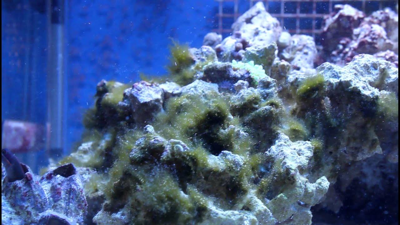 Hydrogen Peroxide And Hair Algae YouTube