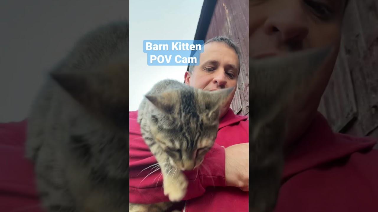 Barn Kitten POV: Befriending the Giant Guard Dog