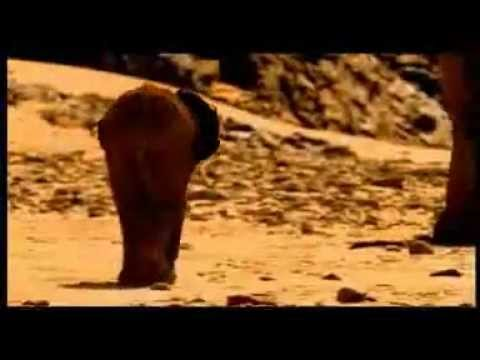 Elephant Nomads of the Namib Desert - Documentary