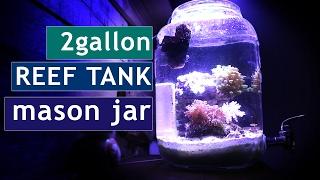 Aquarium in a Jar Reef tank! CORAL UPDATE