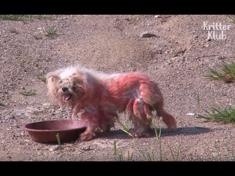 Abandoned Red Dog Waits For Owner To Come Back | Animal in Crisis EP23