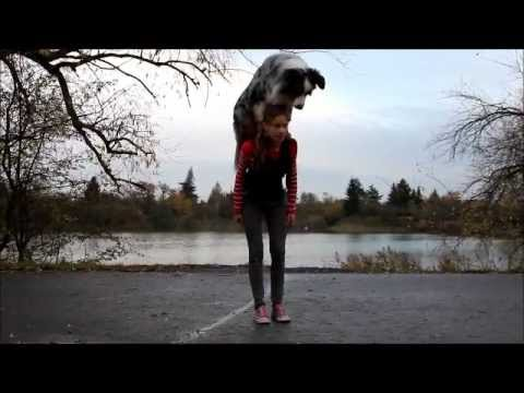 Amazing dog tricks by australian shepherd Charlie