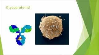 Biochemistry and Cell Biology - Carbohydrates