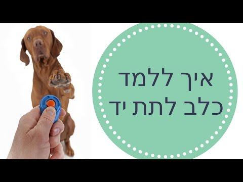 איך ללמד כלב לתת יד - מיוחד!! ? - טל שלוש
