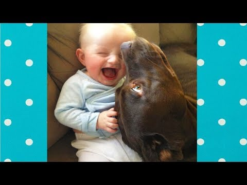 Dog loves Baby | Try Not to Laugh Funny Babies Laughing Hysterically at Dogs Complication