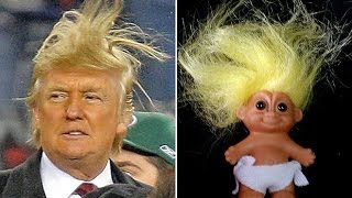 17 THINGS THAT LOOK JUST LIKE DONALD TRUMPS FAMOUS HAIRDO