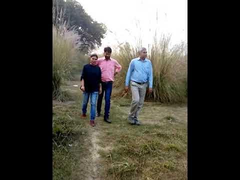 Contract farming of moringa(9)