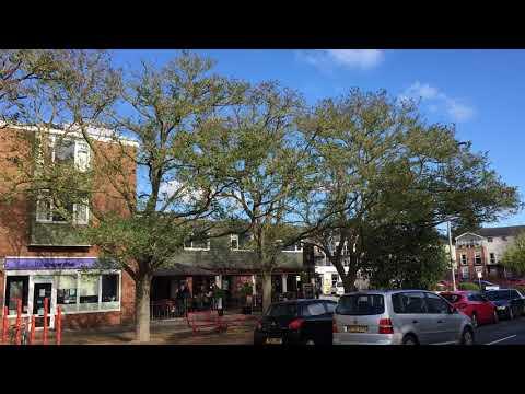 Black Locust - Trees - October 2018