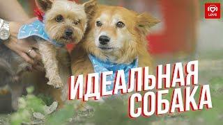"""Love Radio на выставке """"Всем по собаке""""   Как выбрать идеального питомца?"""