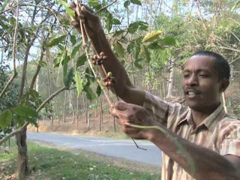 Slow Economic Progress in East Timor