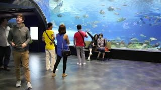 Ocean Park Manila and City Tour with Intramuros, Rizal Park and American Cemetery and Memorial