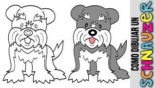 Schnauzer 🐶 Como Dibujar Un Cachorro Schnauzer 🐶 Dibujos Para Dibujar De Perro Schanuzer 🐶 Puppy