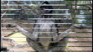 смешные картинки животных, видео приколы с животными.