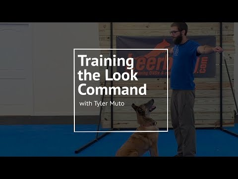 training-your-dog-to-look-at-you