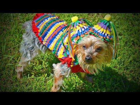 Cutest Dogs 🐶 Cute And Lovely Dogs In Costume 🐶[Funny Pets]