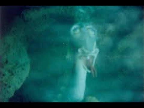 Unexplained Lake Creature Florida(full documentary)HD