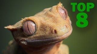 TOP 8: Animales que se Creían Extintos