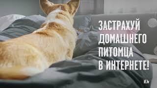 Страхование собак и котов - if.lv