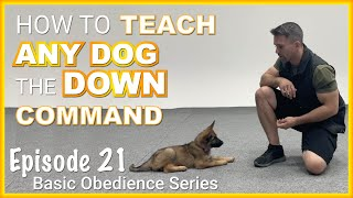 How to Teach ANY Dog to Lie Down on Command. Episode 21