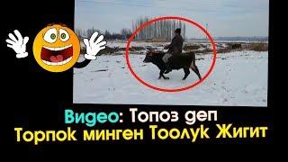 Топоз деп Торпок минген Тоолук Жигит | Элдик Роликтер