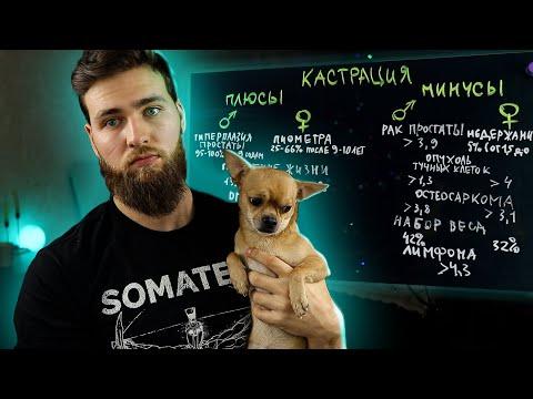 Кастрация собак - за и против / Зачем нужна стерилизация?