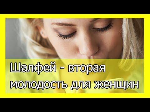 Шалфей - вторая молодость для женщин