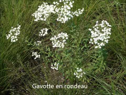 Marin Marais: Gavotte en Rondeau