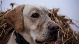 Waterfowl Hunting: Waterfowl Evolution Working with Hunting Dogs Episode 7 Full